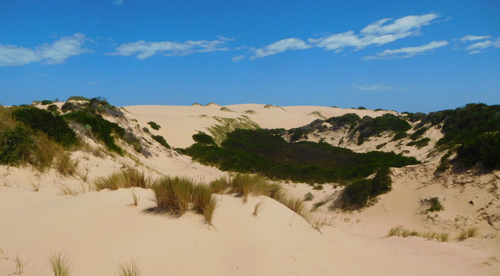 Walk the Sanddunes on our Coorong Tours