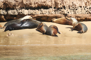 See great wildlife on our Eyre Peninsula Tours