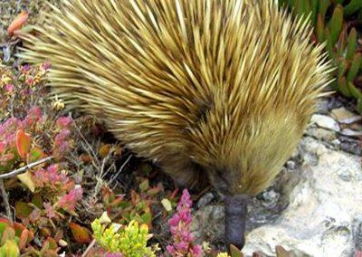 Eco Tours on Kangaroo Island