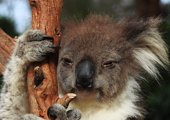Australian Wildlife Tours