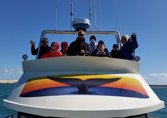 Eco Boat Tours in Australia