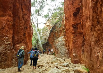 tour to the Western MacDonnell Ranges