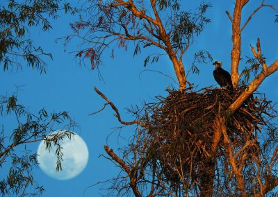 Birds Nesting in the Kimberley
