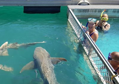 Swim with Sharks on our Kimberley Tours