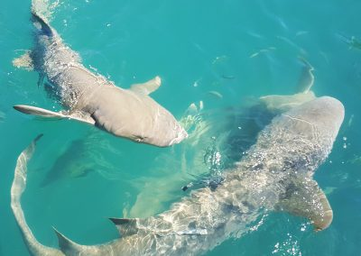 Horizontal Falls Day Tours with Shark Swim